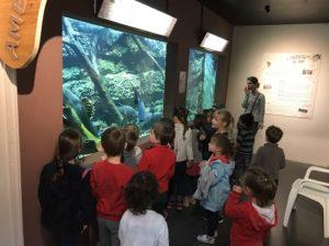 aquarium-site